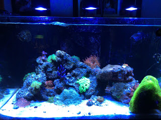 Reef Aquarium.jpg